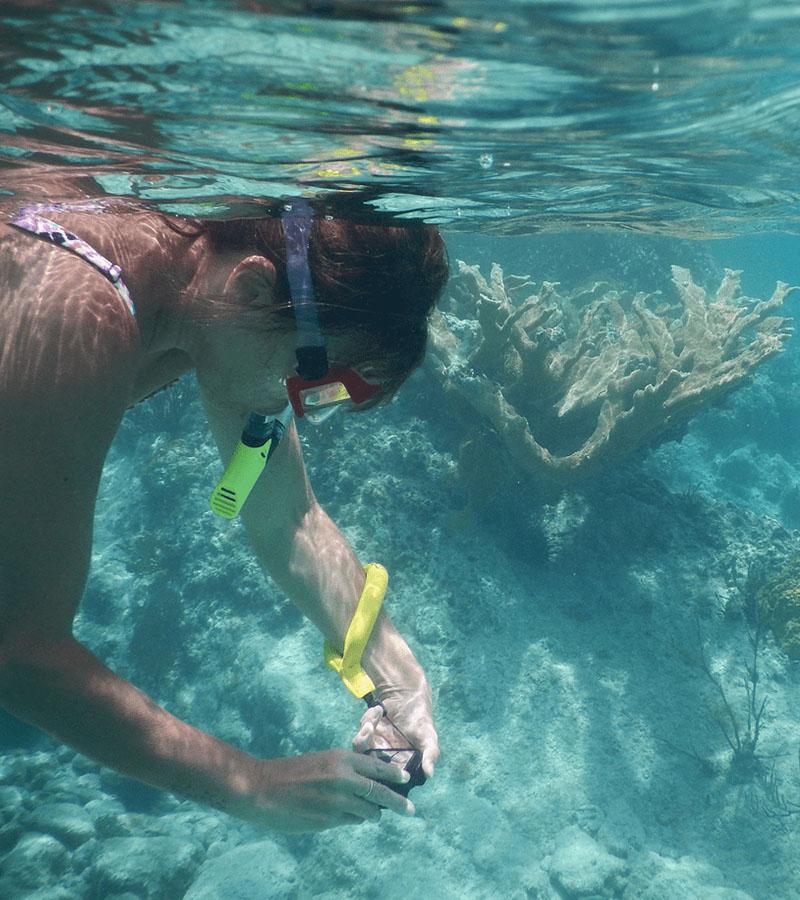 Snorkeling Trips